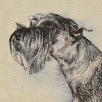 Iris the Schnauzer by Chris Duke