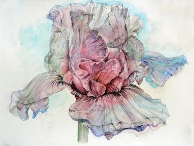 Ethereal Iris by Chris Duke
