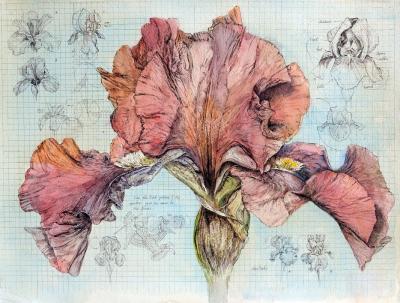 Iris Explained by Chris Duke