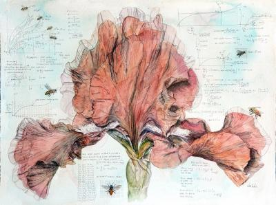Iris with Bees by Chris Duke