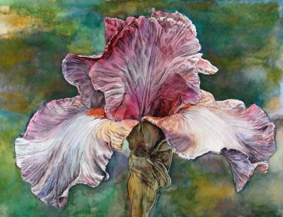 Iris on Green Field by Chris Duke