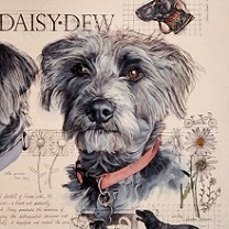 Daisy Dew by Chris Duke