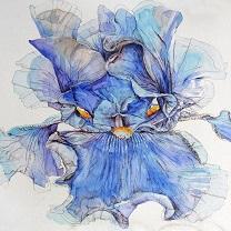 Gazing Iris by Chris Duke