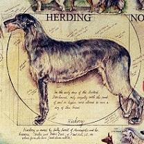 Hickory - 2012 Westminster Poster by Chris Duke