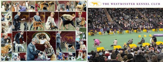 2013 Westminster Dog Show - Chris Duke